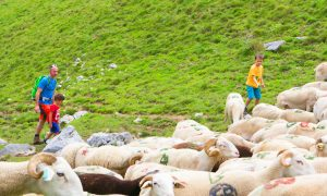 Sentier à Portet d'Aspet : Boucle du col d'Etchar